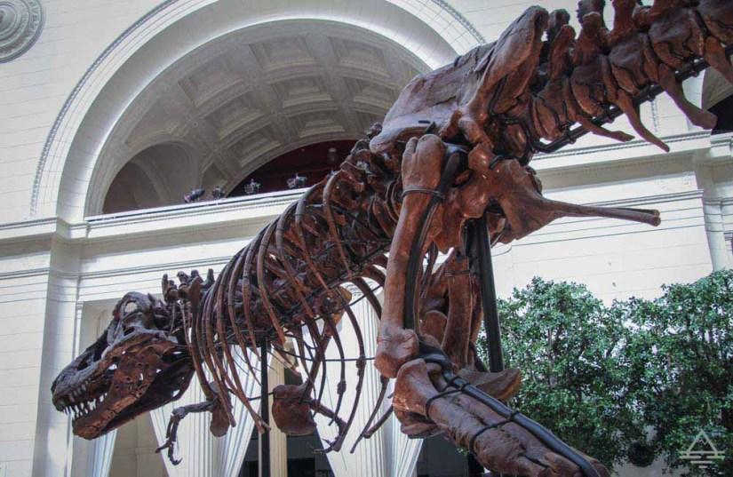 dinosaur at the Field Museum