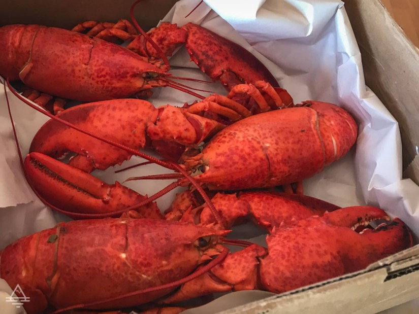 Three Cooked Lobsters