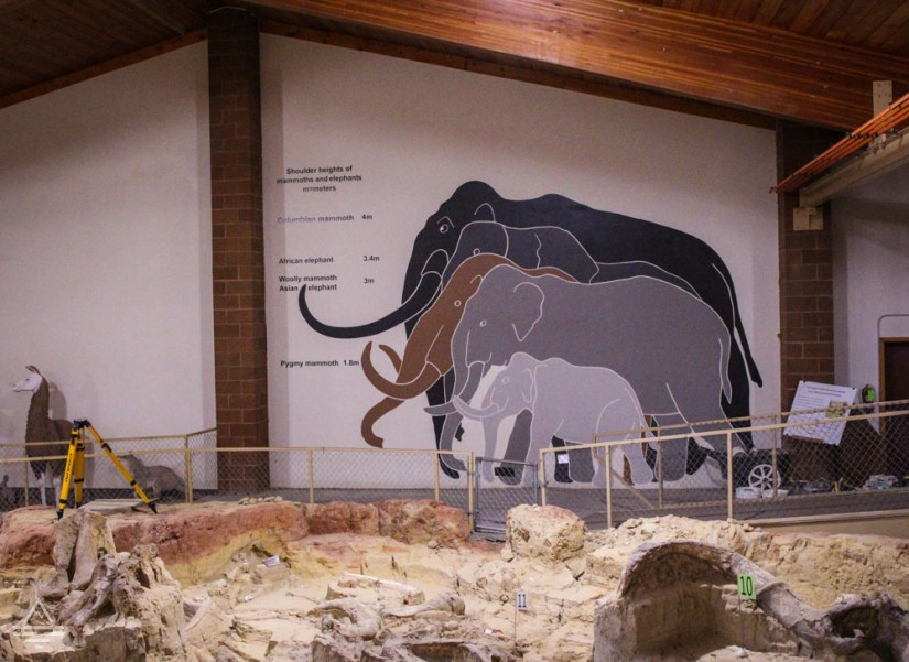 Wall of museum painted with actual sizes of elephant and mammoth species.