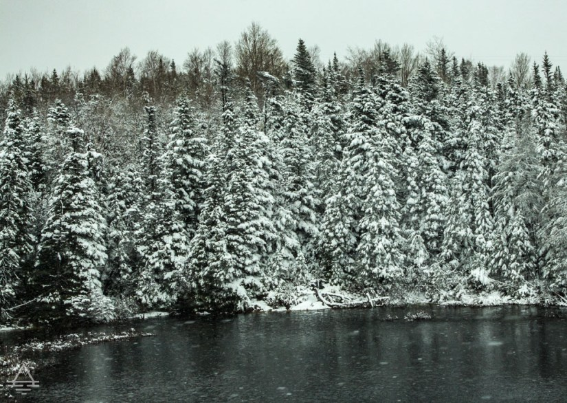 Newfoundland Vacation Trees with Snow