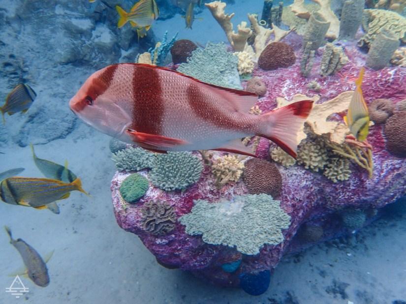 Fish near Coral Reef