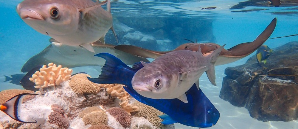 Three Fish at Discovery Cove