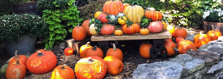 grouping of pumpkins of various sizes
