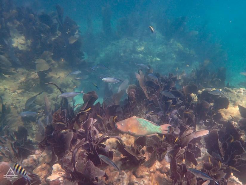 Underwater view of Sombrero Reef