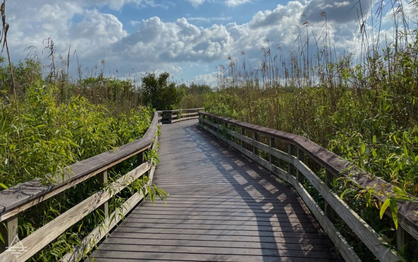 Boardwalk Trail thru tall plants in Everglades National Park on the Anhinga Trail