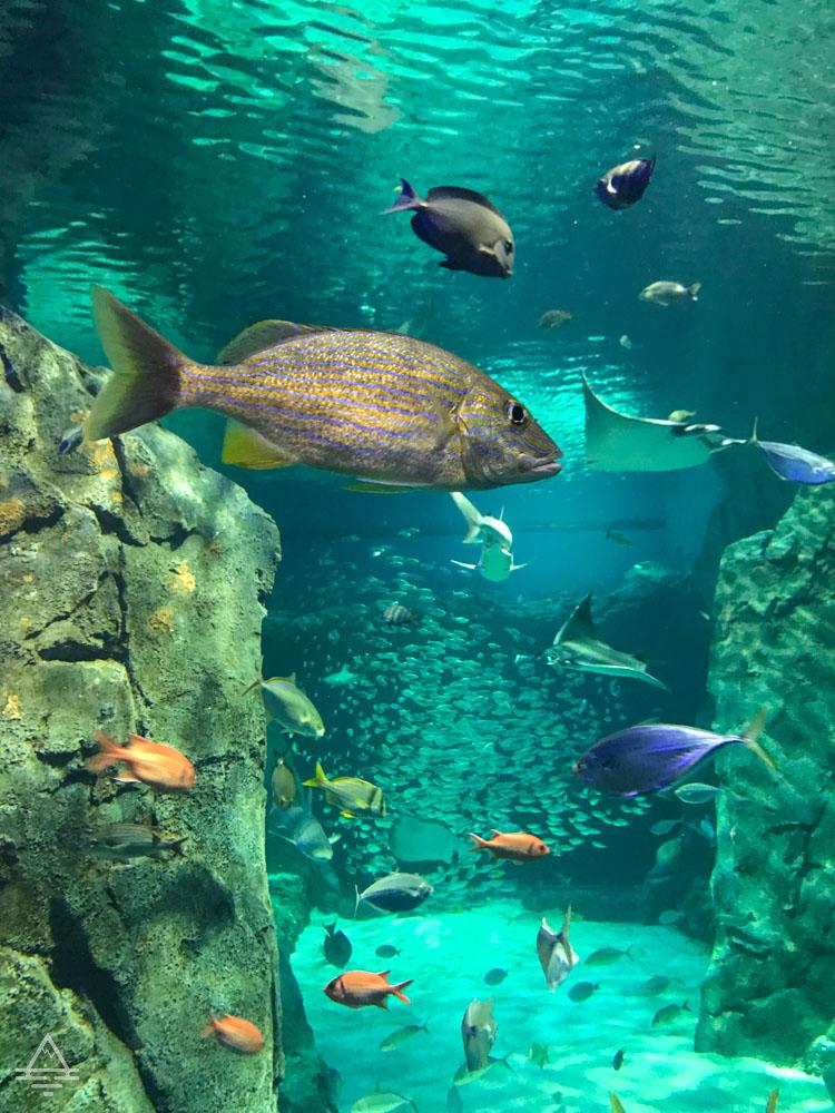 Fish in aquarium in St Louis