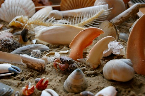 sea life display