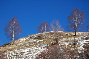 3 birches on hill