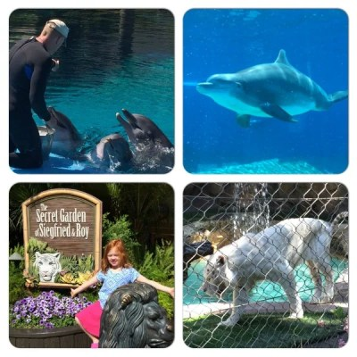 Las Vegas Siegfried and Roy Secret Garden and Dolphin Habitat