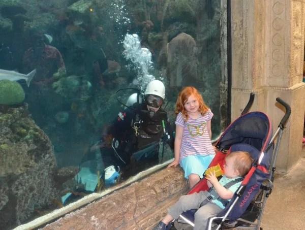 Mandalay Bay Shark Reef Aquarium Las Vegas
