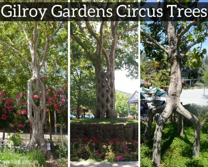 Gilroy gardens review the best little amusement park you for Gilroy garden trees