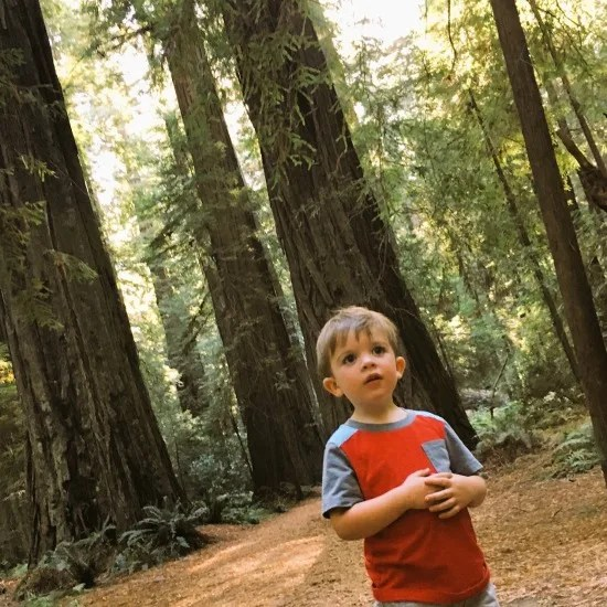 Toddler exploring Redwood National Park in Northern California.