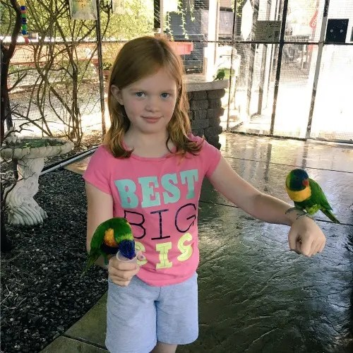 Redding California with Kids - Turtle Bay Lorikeets