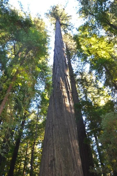 Spring Break Destinations in California - Avenue of the Giants