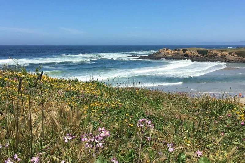 California's Mendocino County with Kids: The Comprehensive Guide
