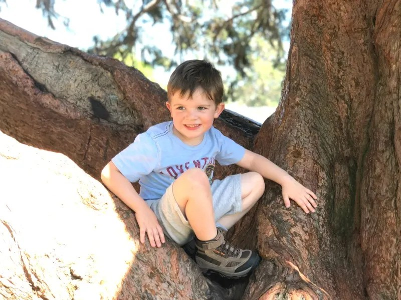 Hiking with a Toddler - Toddler Climbing Tree with Hiking Boots