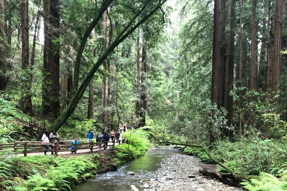 Muir Woods - Creek Path