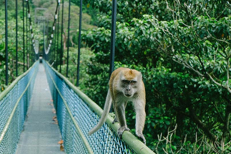 treetop-walk-macritchie-singapore-by-febry-fawzi-12