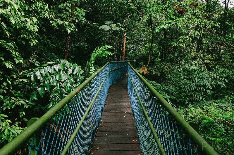 treetop-walk-macritchie-singapore-by-febry-fawzi-16