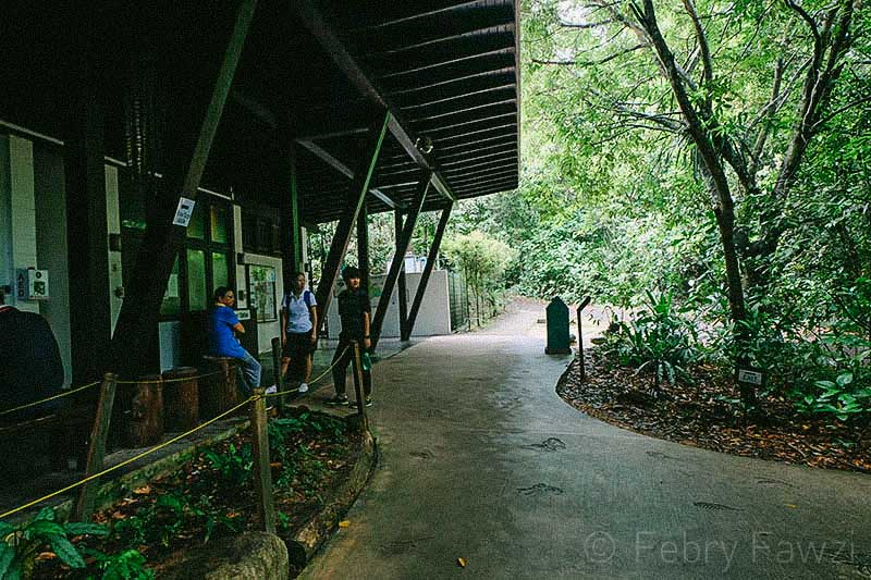 treetop-walk-macritchie-singapore-by-febry-fawzi-7