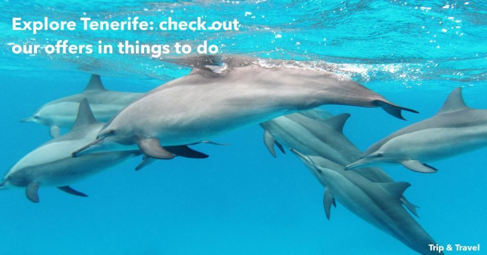 Tenerife, things to do, excursions, Playa de las Américas, whales and dolphins watching, Spain, dolphin trip, whale watching