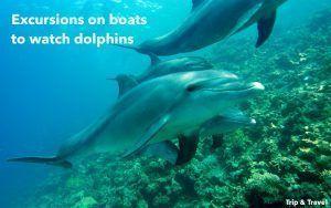 Playa de las Américas Dolphin Trip, excursions, Tenerife, hotels, hoteles, excursiones, Spain, España, Islas Canarias, Canary Islands, car renting, whales watching, sea