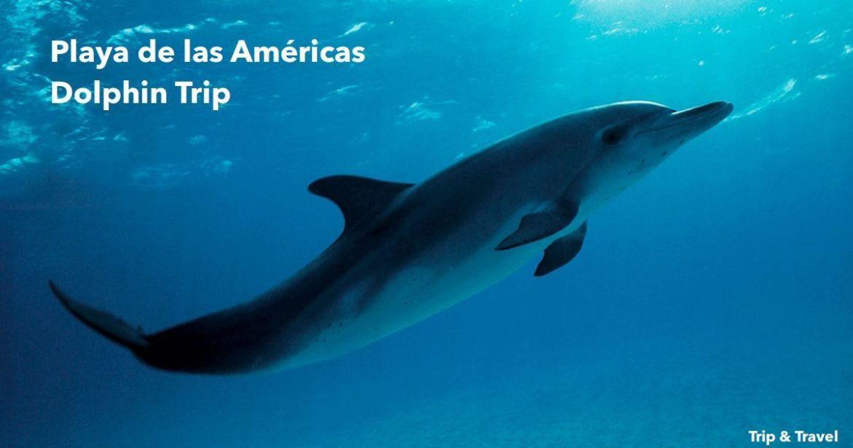 Playa de las Americas Dolphin Trip, hotels, excursions, Tenerife, Spain, Canary Islands, Islas Canarias, España, hoteles, excursiones, alojamiento, car renting, sea