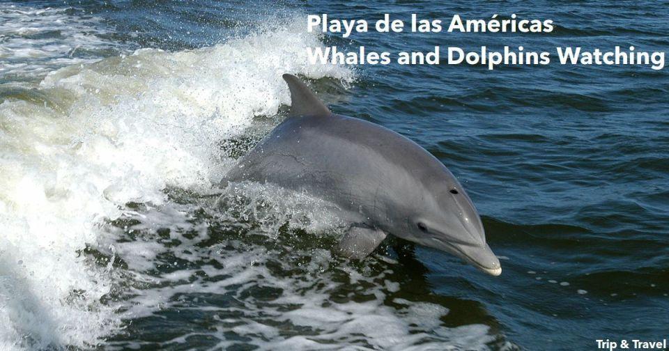 Playa de las Américas Whales and Dolphins Watching, Canarias, Canary Islands, España, Spain, Tenerife, car renting, hotels, hoteles, alojamiento, excursions, excursiones