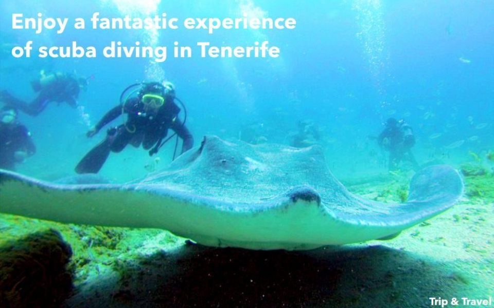 Tenerife Day Excursions, hotels, tickets, reservations, holidays, scuba diving, snorkeling, Canary Islands, Spain, whales watching, dolphins show, paella cooking show
