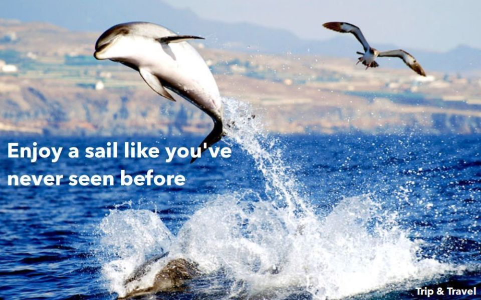 Tenerife Excursions Los Gigantes, tickets, hotels, reservations, dolphins watching, whales watching, boat trip, Canary Islands, Spain, España, Islas Canarias, Flipper Uno
