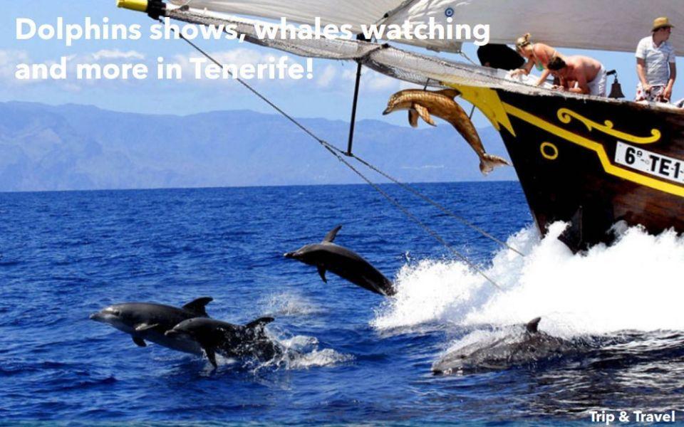 Tenerife Boat Hire, hotels, Playa de las Américas, yachts, catamarans, reservations, restaurants, cheap, tickets, tours, dolphins show, whales watching, parascending