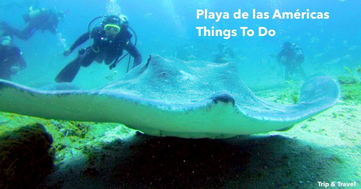 Tenerife Things To Do, Playa de las Américas, tickets, cheap, excursions, reservations, hotels, restaurants, trips, tours, attractions, dolphins show, whales watching