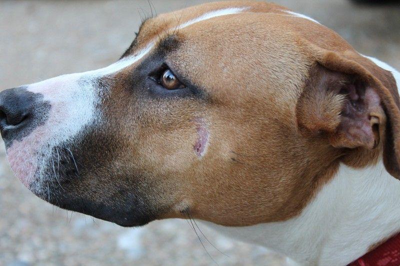 Obračun uzgajivača pasa: Kujicu Zitu zavezao za motocikl i vukao je deset kilometara!