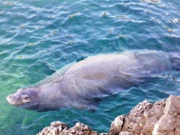 morski covik