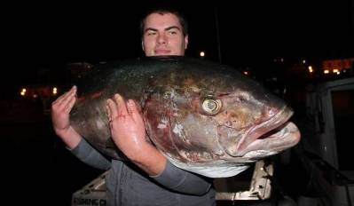 Kad Slavonac Dalmatince uči ribanju, love se kapitalci: Zadranin kraj Žirja ulovio gofa od 50 kilograma!