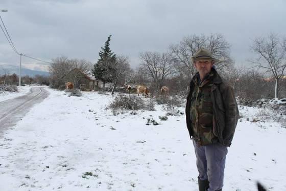 Ante Čustonjić čuva krave u Miljevačkim Bogatićima (Foto Hrvoslav Pavić)