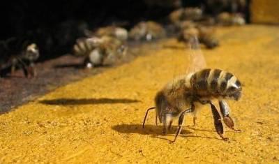 Znanost i dalje bez odgovora: Zašto nestaju pčele?