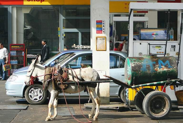 Hoće li me naftaši opet namagarčiti? - kao da se pita ovaj magarac.