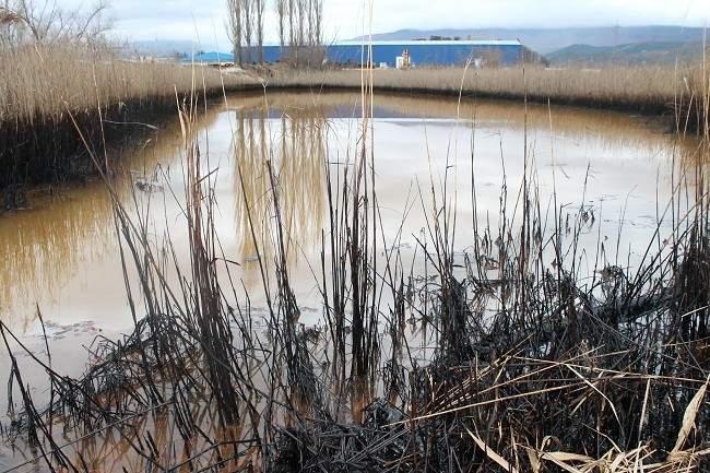 Zagađeno močvarno područje u blizini tvornice DIV (Foto: Hrvoslav Pavić)