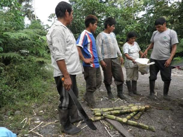 šećerna trska spremna za degustaciju