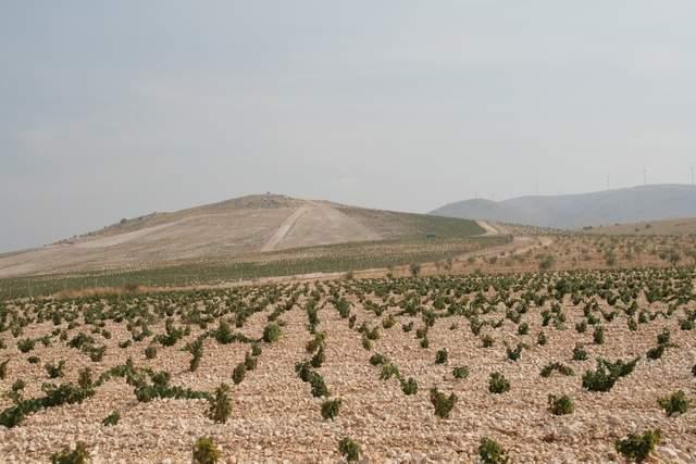 vinograd, snimila: J.Klisović
