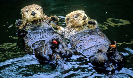 Životinje u incidentu s naftom (foto www.glogster.com)