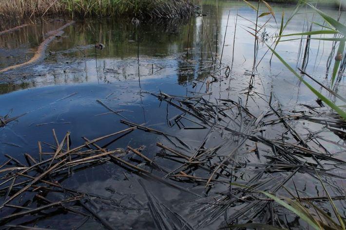 Kiše počistile kninsku lagunu mazuta (Foto H. Pavić) (14)