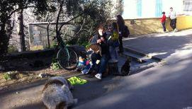 Jedan od uličnih svirača i manji dio uličnih pasa i mačaka