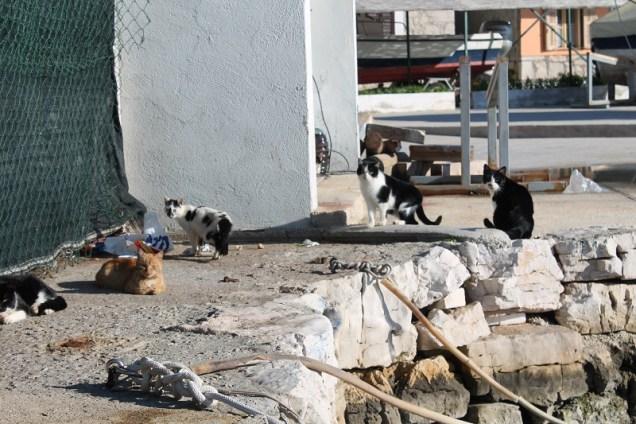 Tišnjanske mačke nekada su plašili da će ih pojesti talijanski turisti, a kako su preživjele svaki ferragosto, valjda će preživjeti i sterilizaciju (Foto: Tris/H. Pavić)