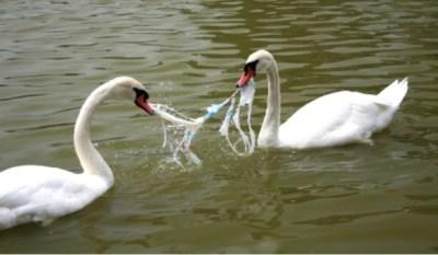Prijatelji životinja: Naplatom, kaznama i porezom protiv plastičnih vrećica
