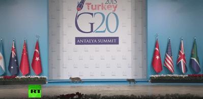 Mačke na summitu G20 (screenshot)