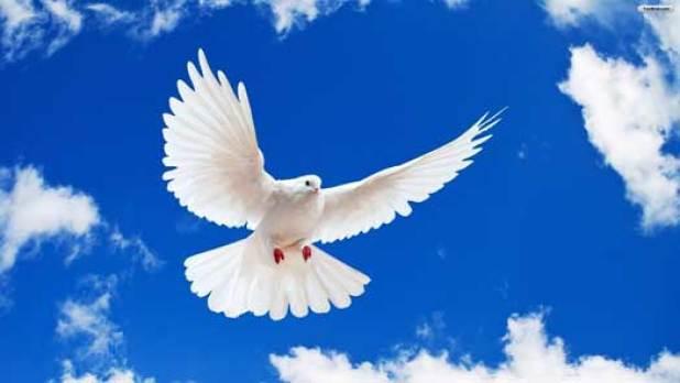 Bijela golubica obično simbolizira mir, dok je ne upucaju iz lovačke puške (foto www.ecology.com)