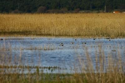 PP Vransko jezero prijavilo projekte vrijedne gotovo 30 milijuna kuna