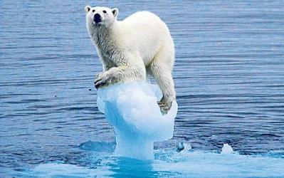 Ilustracija: Lički medvjed odselio (foto Facebook)